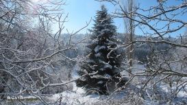 weihnachtstanne_0439
